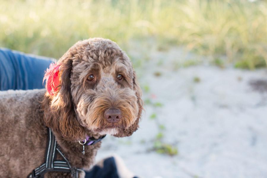 Miami dog photographer